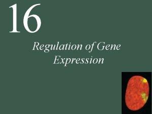 16 Regulation of Gene Expression 16 Regulation of