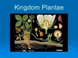 Kingdom Plantae Introduction Organisms within Kingdom Plantae are