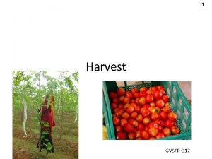 1 Harvest GVSPP Q 17 Harvest the crops