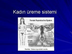 Kadn reme sistemi Kadn i reme organlar organa