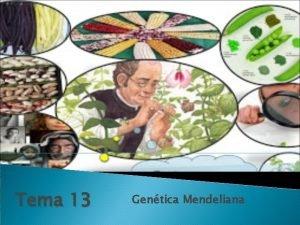 Tema 13 Gentica Mendeliana 5 La gentica del