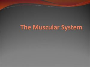 The Muscular System Overview of Muscular System Types