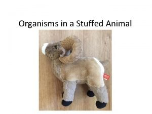 Organisms in a Stuffed Animal Organisms in Bighorns