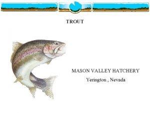TROUT MASON VALLEY HATCHERY Yerington Nevada MASON VALLEY