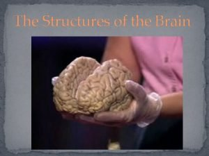 The Structures of the Brain The Brain Stem