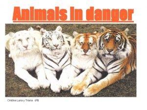 Animals in danger Cristina Luna y Triana 6B