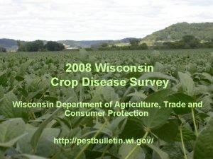 2008 Wisconsin Crop Disease Survey Wisconsin Department of