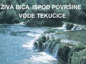 IVA BIA ISPOD POVRINE VODE TEKUICE BILJKE teko