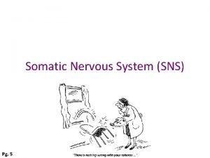 Somatic Nervous System SNS Pg 5 Somatic Nervous