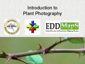 Introduction to Plant Photography Purpose Being able to