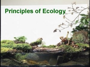 Principles of Ecology Whats the BIG IDEA Energy