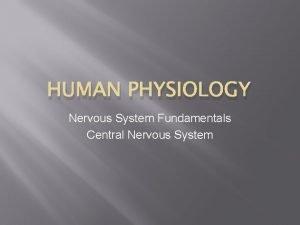 HUMAN PHYSIOLOGY Nervous System Fundamentals Central Nervous System