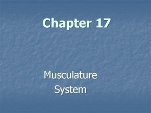 Chapter 17 Musculature System The Musculature System The