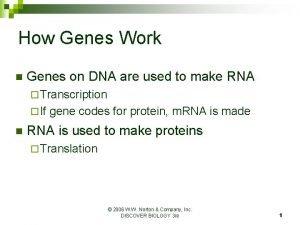 How Genes Work n Genes on DNA are