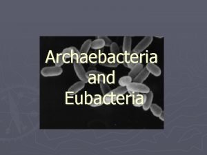 Archaebacteria and Eubacteria What are bacteria Bacteria are