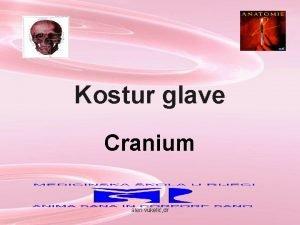 Kostur glave Cranium alen vukeli dr Cranium alen