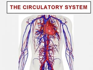 THE CIRCULATORY SYSTEM STRUCTURES IN THE CIRCULATORY SYSTEM