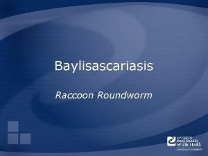 Baylisascariasis Raccoon Roundworm Overview Organism History Epidemiology Transmission