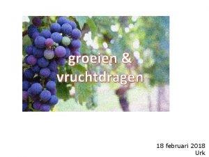 groeien vruchtdragen 18 februari 2018 Urk Kolosse 1