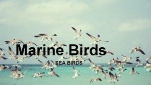 Marine Birds SEA BIRDS Diet Seabirds evolved to