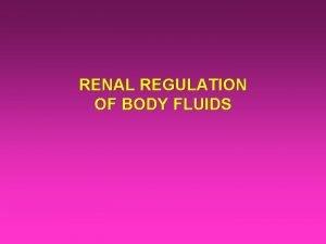 RENAL REGULATION OF BODY FLUIDS Water Diuresis By