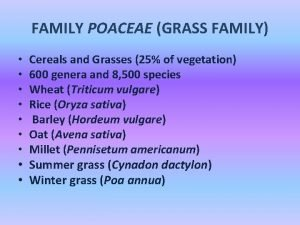 FAMILY POACEAE GRASS FAMILY Cereals and Grasses 25