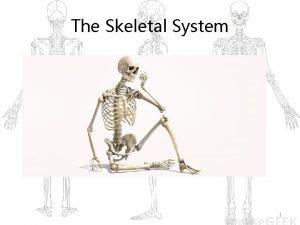 The Skeletal System 1 Skeletal System Parts of