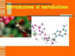 Introduzione al metabolismo 1 2 Funzioni del metabolismo