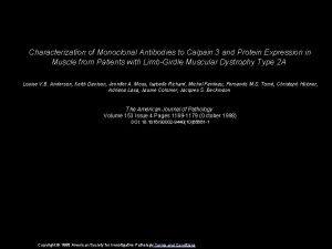 Characterization of Monoclonal Antibodies to Calpain 3 and