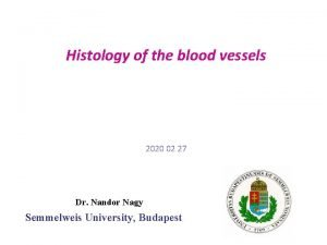 Histology of the blood vessels 2020 02 27