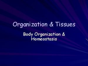 Organization Tissues Body Organization Homeostasis Introduction Levels of