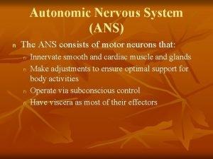 Autonomic Nervous System ANS n The ANS consists
