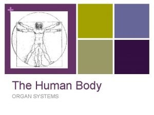 The Human Body ORGAN SYSTEMS Excretory System Excretory