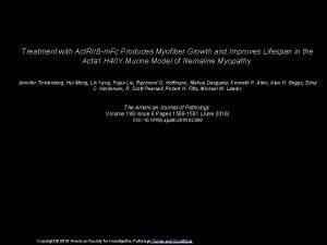 Treatment with Act RIIBm Fc Produces Myofiber Growth