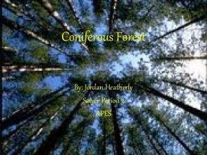 Coniferous Forest By Jordan Heatherly Salyer Period 3