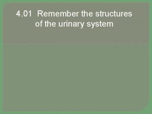 4 01 Remember the structures of the urinary