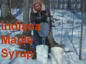 Indiana Maple Syrup Indiana Maple Syrup 2003 Season