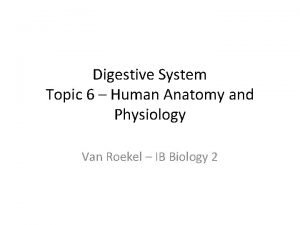 Digestive System Topic 6 Human Anatomy and Physiology