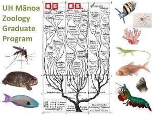 UH Mnoa Zoology Graduate Program Zoology Graduate Program