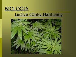 BIOLOGIA Lieiv inky Marihuany 1 1 Uvod Uloha
