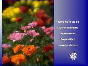 Toutes les fleurs de lavenir sont dans les