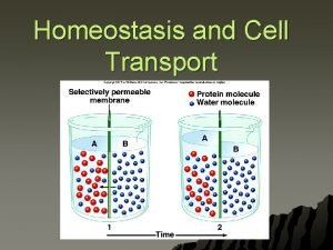 Homeostasis and Cell Transport What is Homeostasis u