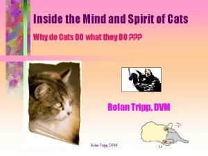Inside the Mind and Spirit of Cats Why