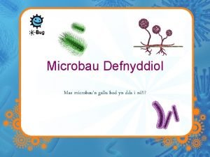 Microbau Defnyddiol Mae microbaun gallu bod yn dda
