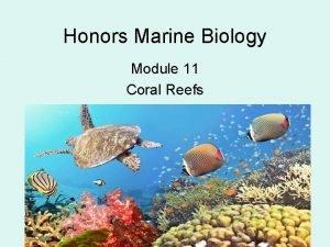 Honors Marine Biology Module 11 Coral Reefs Class