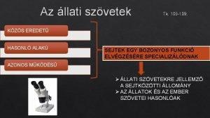 Az llati szvetek Tk 105 109 KZS EREDET