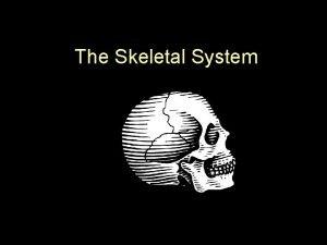 The Skeletal System The Skeletal System Definition all