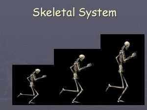 Skeletal System The Skeletal System in Action The