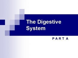 The Digestive System PART A Digestive System Overview