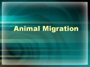Animal Migration What is Migration Migration is the